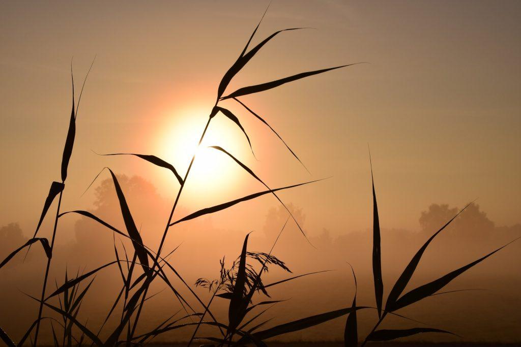 sunrise-1688094_1920